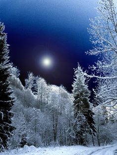 I think this is the last pic of this kind of blue moonlight winter scenes, lol! Now springtime can come. (although I still have some other snow and ice pics I didn't post yet) Winter Szenen, I Love Winter, Winter Magic, Winter Night, Winter Time, Clear Winter, Imagen Natural, I Love Snow, Beautiful Moon