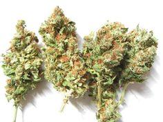 G13 - http://www.semena-marihuany.cz/cs/article/95-g13-legendarni-afghanske-konopi