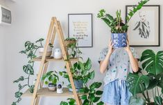 Indoor plant guide - 5 beginner plants you can't kill - Connie and Luna