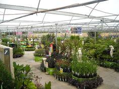 Plimmerton, Wellington, New Zealand Dream City, Mecca, Auckland, New Zealand, How To Find Out, Flora, Island, Landscape, Plants