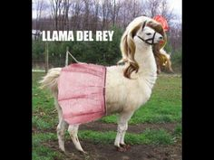 I like lana del rey, but this is funny. haha :D LOL Alpacas, I Love To Laugh, Make Me Smile, Haha, Funny Animals, Cute Animals, Music Memes, Music Puns, Funny Music