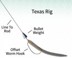 Your Guide to Using Plastic Worms for Bass Fishing - Best Fishing Tackle Fishing Rigs, Bass Fishing Tips, Best Fishing, Fishing Tackle, Fishing Boats, Fly Fishing, Fishing Basics, Worm Hook, Australian Bass