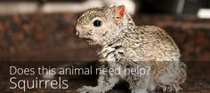 You've found a squirrel that you think needs help. What should you do?