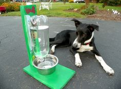 This clever project cuts down on the number of times you have to fill up your dog's water bowl. Once the water level in the bowl dips below the mouth of the pop bottle, more will be released for your pup to enjoy.