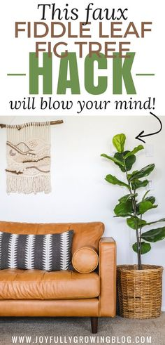 This fiddle leaf fig tree hack is my best $15 secret! Find out how to DIY a fiddle leaf fig and where to by everything you need, for cheap! #JoyfullyGrowingBlog #DIYhack #FiddleLeafFig #IndoorPlants