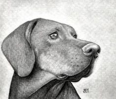 Drawing Techniques how to draw a dog head, dog head step 13 Pencil Art Drawings, Realistic Drawings, Love Drawings, Drawing Sketches, Drawing Guide, Dog Drawing Tutorial, Pencil Drawing Tutorials, Deer Drawing, Painting & Drawing