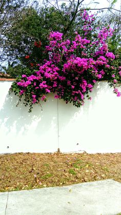#bougainvillea, Búzios RJ Brasil, photo angela landim