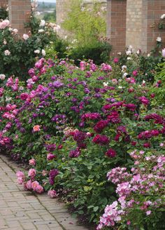 pretty cottage garden border ideas 3 There are also some things to consider with the garden paths. If you want to create a typical Cottage garden, you should make sure that the paths do not become too Garden Shrubs, Herb Garden, Garden Landscaping, Garden Roses, Easy Garden, Garden Paths, Garden Bridge, Landscaping Ideas, Garden Art