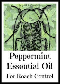 Peppermint Oil For Roaches Peppermint Essential Oil Oils Roaches