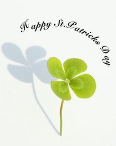 Happy st patricks day quotes humorous sayings Irish messages which are funny and hilarious.