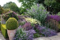 Summer border of Buddleia davidii 'Lohinch', Clematis viticella 'Etoile violette', Nepeta racemosa 'Walker's low' Anthemis tinctoria 'E.C...