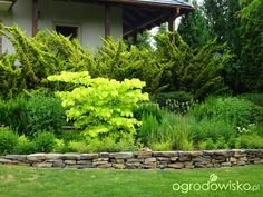 Mój azyl na wichrowym wzgórzu - strona 792 - Forum ogrodnicze - Ogrodowisko Herbs, Plants, Herb, Plant, Planets, Medicinal Plants