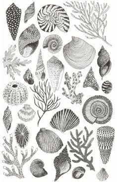 Caitlin Foster Shells-Plakat, 2015 - Lern how to. Carta Collage, Meer Illustration, Ocean Tattoos, Sea Tattoo, Watercolor Ocean, Tattoo Watercolor, Shell Art, Art Plastique, Art Inspo