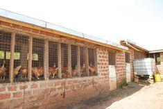 How to Start Local Chicken Farming for Eggs/Chicks Production + eBook Chicken Shelter, Chicken Coop Run, Chicken Cages, Chicken Garden, Building A Chicken Coop, Poultry House, Backyard Poultry, Backyard Chicken Coops, Chickens Backyard