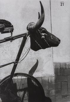 Buy online, view images and see past prices for Graciela Iturbide Torito (young bull),. Invaluable is the world's largest marketplace for art, antiques, and collectibles. Tv Movie, British Journal Of Photography, Gelatin Silver Print, Arte Popular, Female Photographers, Museum Of Fine Arts, Comic, Black And White Photography, National Museum