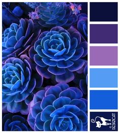 Instantly turn any picture into a palette with ColorSnap, created for you by Sherwin-Williams. Color Schemes Colour Palettes, Colour Pallette, Color Combinations, Purple Color Schemes, Color Blue, Paint Colors For Home, House Colors, Blue Succulents, Design Seeds