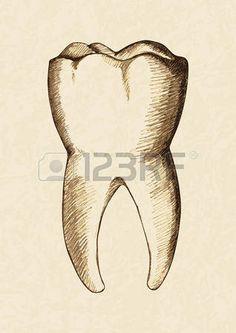 Ilustraci n Boceto de diente humano Foto de archivo