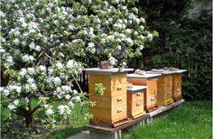 Bienen im Garten