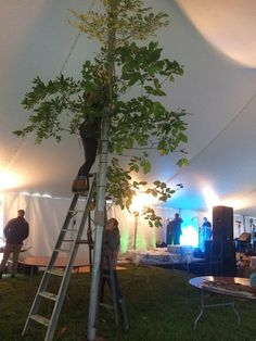 tying tree branches to tent poles to soften the space.