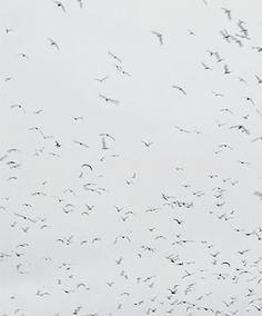 """dessinnoir:  """"Don't they ever stop migrating?""""The Birds (1963)"""