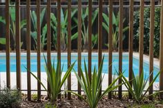 Timber batten pool fence. Formed Gardens.
