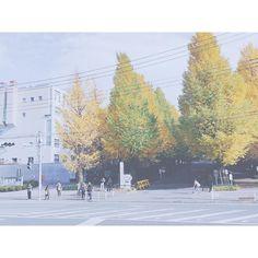 Beautiful autumn has come to Japan.  元気もりもりと思ったけどやっぱり成田空港からの2時間はかなり疲れた着いたら毎年恒例慶應の銀杏並木が美し過ぎて驚き魚が食べた過ぎてソッコー大戸屋におつかれさまでした(自分にw)  #まる旅2016winter #traveling #japan #autumn #autumnleaves