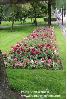Pretty flowers on the Esplanade Helsinki, Finland 2014 Helsinki, Pretty Flowers, Finland, Sidewalk, World, Outdoor Decor, Beautiful Flowers, Side Walkway, Walkway