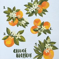 """654 Likes, 14 Comments - Carolyn Gavin (@carolynj) on Instagram: """"Painted these Orange Blossoms for my Miami Journal. #oranges #miami #paint #gouache #painting…"""""""