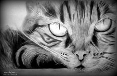 رسم-بالرصاص-رسومات-بقلم-الرصاص-فحم-2013+(110).jpg 896×586 pixels