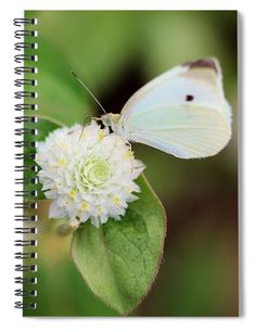 """This 6"""" x 8"""" spiral notebook features the artwork """"Cabbage White Butterfly On Globe Amaranth """" by Karen Silvestri on the cover and includes 120 lined pages for your notes and greatest thoughts."""