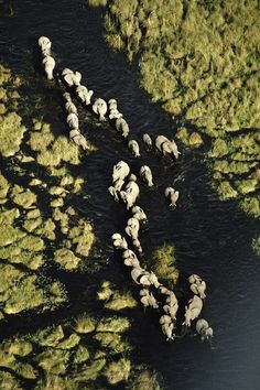 Elephants from the air over the Okavango, Botswana. Visit www.thetripstudio.com and GO.