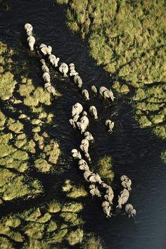 Elephants from the air over the Okavango, Botswana. Visit www.thetripstudio.com and GO.
