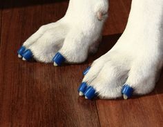 Dr. Buzby's ToeGrips are a specially designed product for senior and special needs dogs who struggle on slippery surfaces.