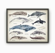 Wale Aquarell Wand Kunst Poster - pädagogische Wal Spezies Größe Vergleichstabelle - Aquarell Wale - Kunstdruck/Poster Meeresbiologie - AB131
