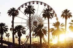Palm trees at Coachella