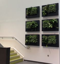 A Self-Contained Wall Mounted Interior Plant Display