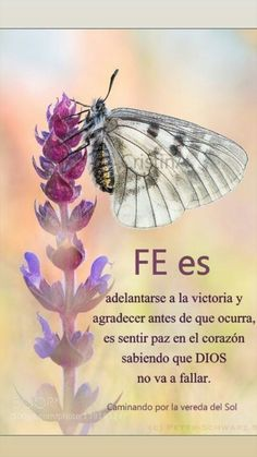 Dios no falla nunca Gods Love Quotes, Good Day Quotes, God Prayer, Prayer Quotes, Bible Quotes, Positive Phrases, Motivational Phrases, Inspirational Quotes, Beautiful Prayers