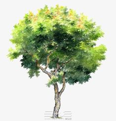 Watercolor Trees, Watercolor Landscape, Watercolor Paintings, Architectural Trees, Trees Top View, Bushes And Shrubs, Cartoon Trees, Tree Clipart, Picture Tree