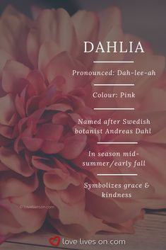 Funeral Flower Meaning | Pink dahlias symbolize grace & kindness, a perfect choice for a funeral arrangement for a loved one who will be remembered for his or her kindness & grace. Click to learn 10+ more types of funeral flowers, funeral flower colour meanings. Funeral Flower Meanings | Funeral Flower Arrangements | Types of Funeral Flowers | Funeral Flowers | Rose Meaning | Flowers that Represent Death | Mourning Flowers #FuneralFlowers #FuneralFlowerMeanings
