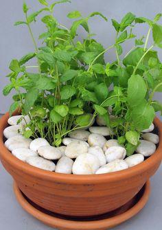 Minttu Herbs, Food, Essen, Yemek, Herb, Spice, Meals