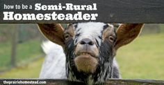 Semi-Rural Homesteading - Maybe you only have an acre or two.  You can still do a lot with that.