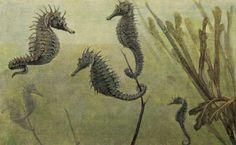 Tierleben: allgemeine Kunde des Tierreichs - 1911 - viaInternet Archive