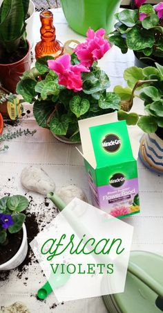 Brighten up your home just like Influencer Bridgette @earmarksocial with potted African Violets. Keeping up their brilliant color for longer has never been easier with the help of Miracle-Gro Bloom Booster Flower Food. #ad