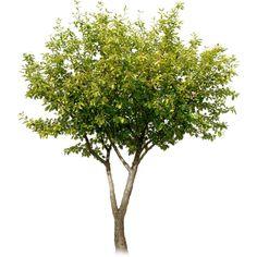 tree ❤ liked on Polyvore
