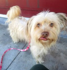 Suzie Q (ID: A385089) is now available at the San Francisco SPCA.