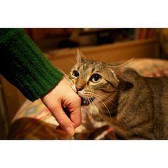 Même s'il n'y a pas de raison apparente, un chat ne griffe ou mord pas son humain par hasard. Découvrez pourquoi votre matou vous attaque et comment le dissuader.