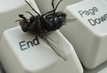 Lorsque vient l'été, viennent les mouches ! Que faire pour s'en débarrasser ? Les prays ou autres répulsifsen tous genres, les bandelettes gluantes accrochées au plafond, on en a assez