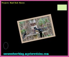 Projects Wood Duck Houses 082943 - Woodworking Plans and Projects!