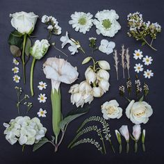 In this series, entitled The Garden Collection, photographer Emily Blincoe creates unique flower arrangements with a creative twist. We recently enjoyed her Sugar Series and, now, she has applied her. Unique Flower Arrangements, Unique Flowers, White Flowers, Beautiful Flowers, Bright Flowers, Flowers Nature, Summer Flowers, Floral Flowers, Fresh Flowers