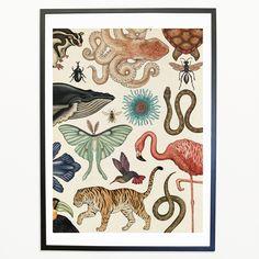 Animalium Print – Katie Scott